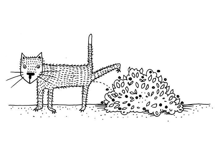 160507-Kissande-katt